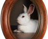 Rabbit miniature oil paintin on aluminumg by Rebecca Luncan