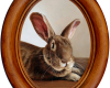 Bunny Rabbit miniature oil painting on aluminum by Rebecca Luncan