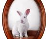 White rabbit oil painting Rebecca Luncan