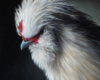 Silkie chicken oil painting by Rebecca Luncan