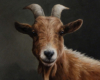 Goat Portrait painting miniature, oil on copper by Rebecca Luncan