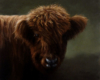 Highland Cow oil painting by Rebecca Luncan