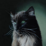 Bruno the cat, miniature oil painting on copper by Rebecca Luncan
