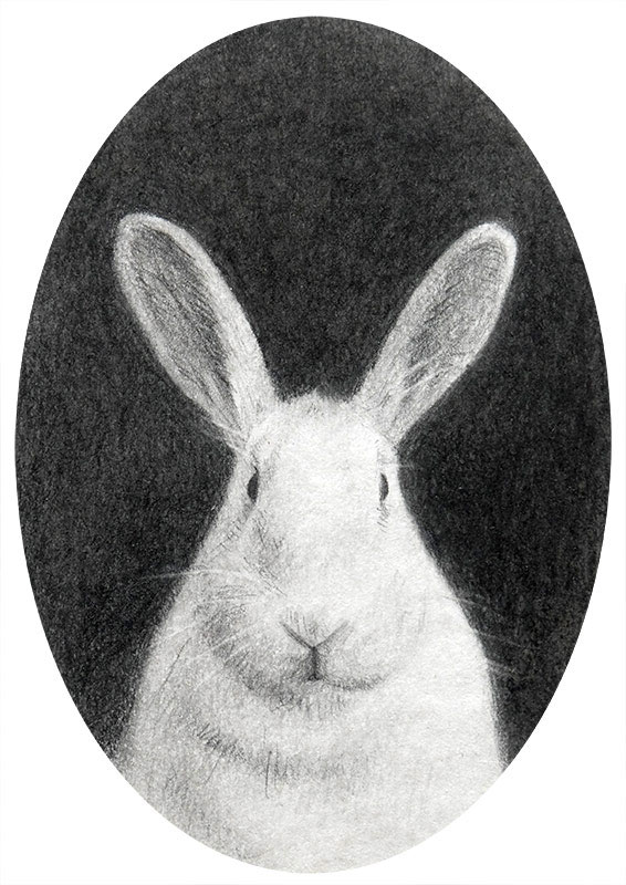 animal portrait rabbit art miniature drawing on paper by Rebecca Luncan