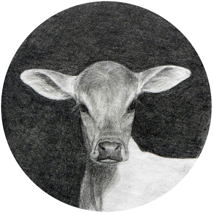 animal portrait calf art miniature drawing on paper by Rebecca Luncan