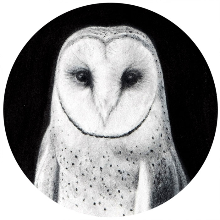 Owl drawing by Rebecca Luncan