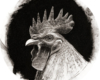 Rooster drawing by Rebecca Luncan