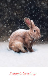 Snow Rabbit Season's Greeting Cards