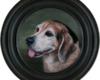Beagle pet portrait painting by Rebecca Luncan