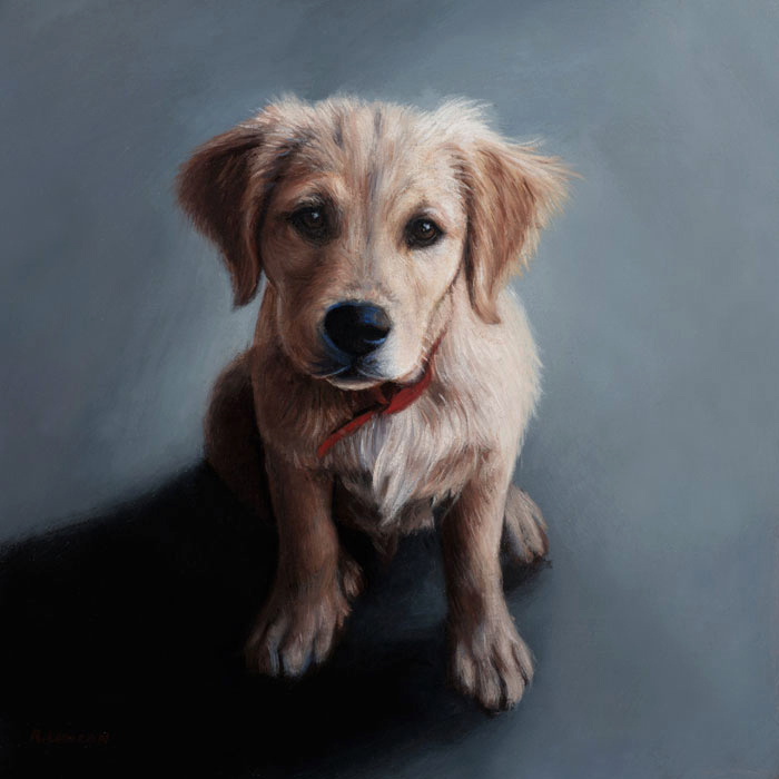 pet portrait oil painting of golden retriever puppy by Rebecca Luncan