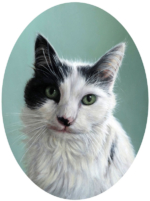 cat oil portrait painting of fluffy cat by Rebecca Luncan