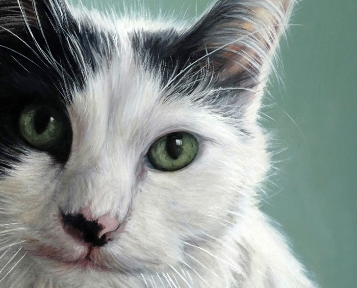 Oil painting detail of pet portrait of fluffy cat by Rebecca Luncan
