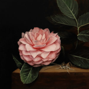Pink Camellia and Cave Cricket oil on copper 5″ x 5″ by Rebecca Luncan