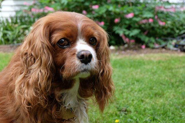 photos for a pet portrait painting