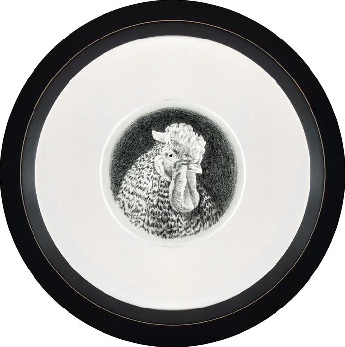 graphite portrait of chicken, framed by Rebecca Luncan