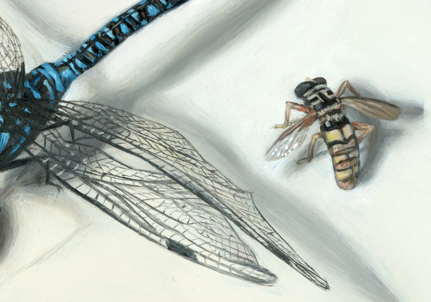 Insect painting detail of bee and dragonfly wing by Rebecca Luncan