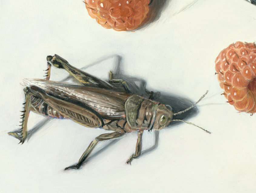 Insect painting in progress by Rebecca Luncan