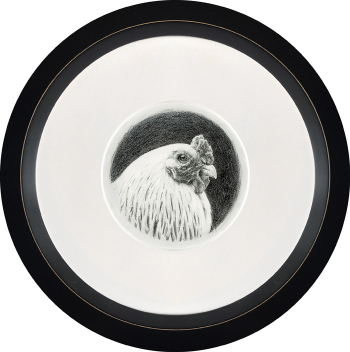 graphite portrait of chicken, framed by Rebecca Luncan