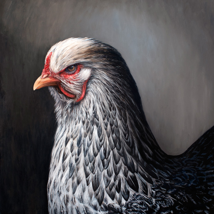 Chicken painting by Rebecca Luncan oil on aluminum representational art