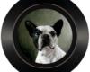 Miniature pet portrait painting framed by Rebecca Luncan