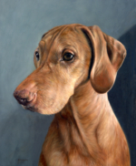 pet portrait painting of hungarian vizsla, Nusi, By Rebecca Luncan