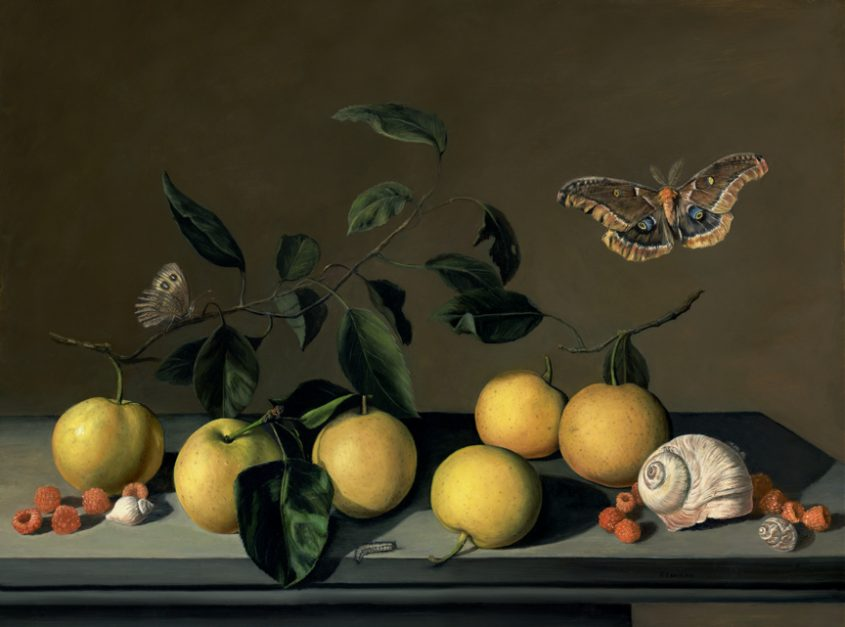 Polyphemus moth over nashi fruit still life oil painting by Rebecca Luncan