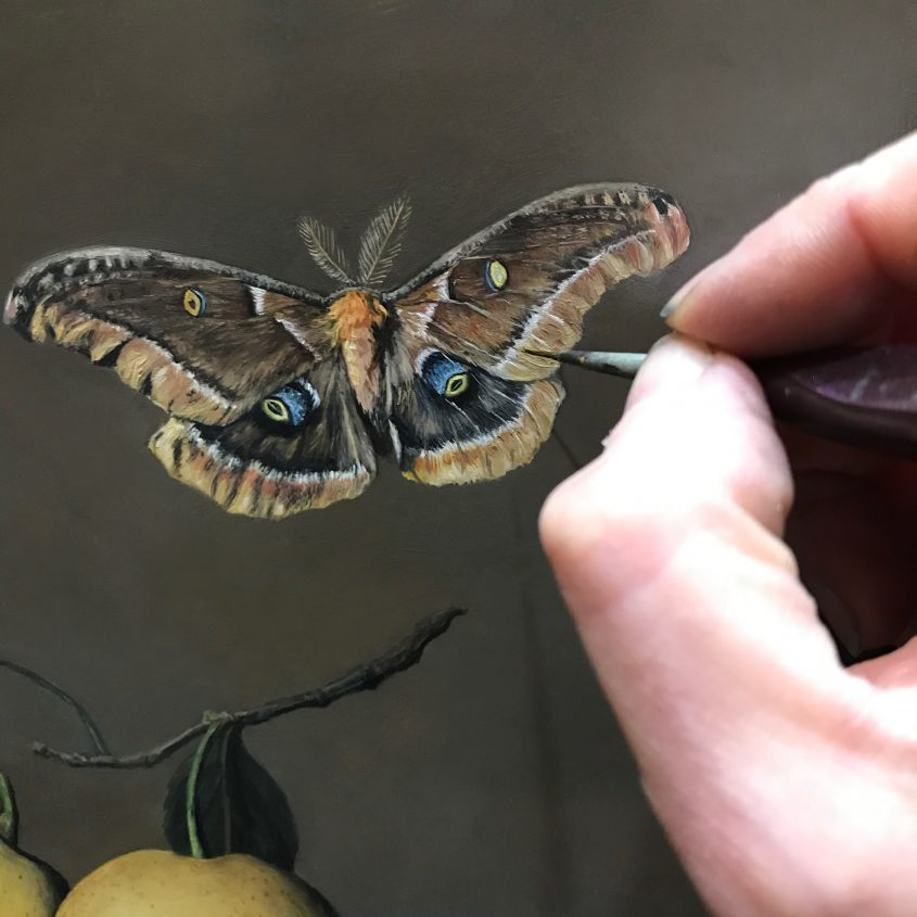 polyphemus moth in progress oil painitng by Rebecca Luncan