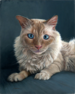 Portrait painting of flame point ragdoll siamese cat by Rebecca Luncan
