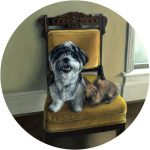 portrait painting of lion head rabbit and shih tzu in formal setting by realist painter, Rebecca Luncan