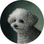 Pet portrait painting of white mini poodle by Rebecca Luncan