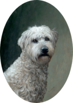 Pet portrait of Wheaten Terrier classical oil painting by Rebecca Luncan