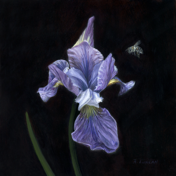 still life oil painting on copper of iris and bee by Rebecca Luncan