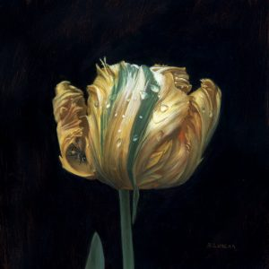 still life painting of Parrot Tulip, oil on copper, 5 x 5 by Rebecca Luncan