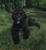 pet portrait Dollie portrait of labradoodle oil paitning by Rebecca Luncan